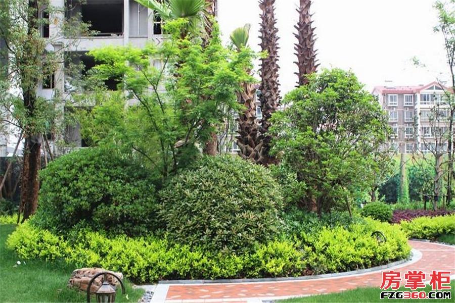 方诚棕榈泉实景图